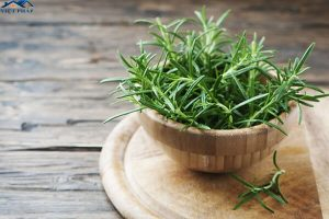 Rosemary là gì? Rosemary có công dụng gì trong đời sống của chúng ta?